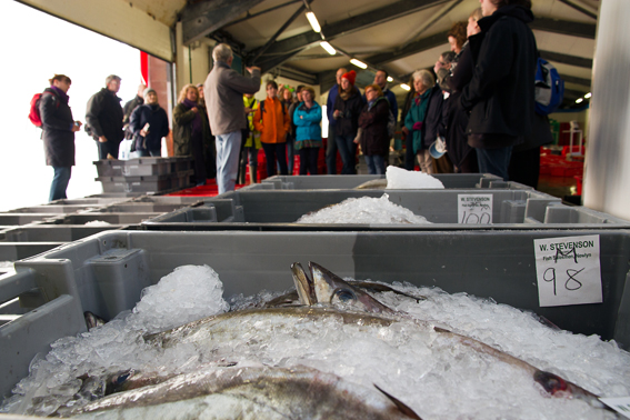 Participants at Newlyn Fish Auction